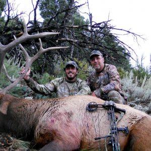 Southwest Desert Archery Bull